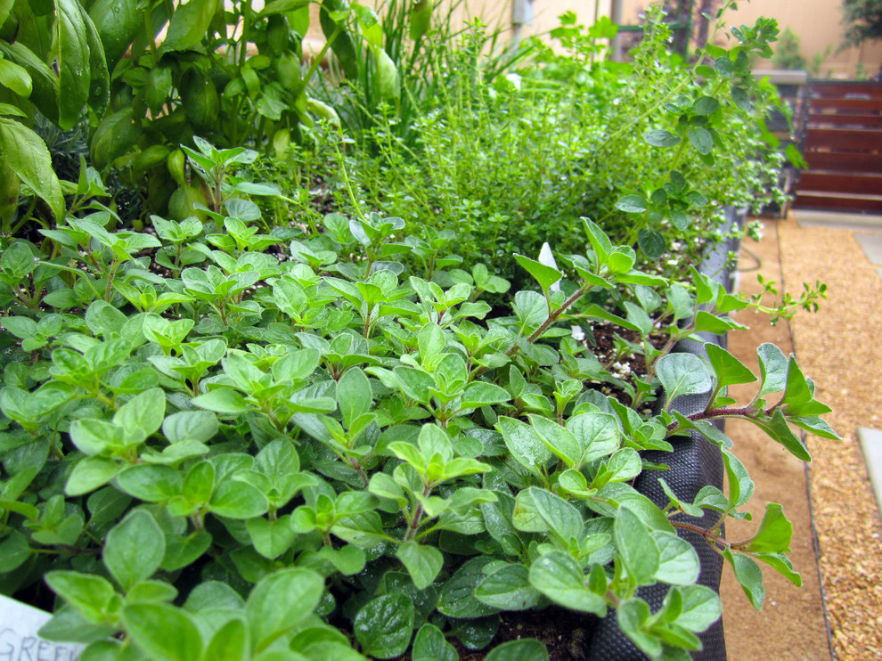 Herbs and vegetable in a raised planter trough.