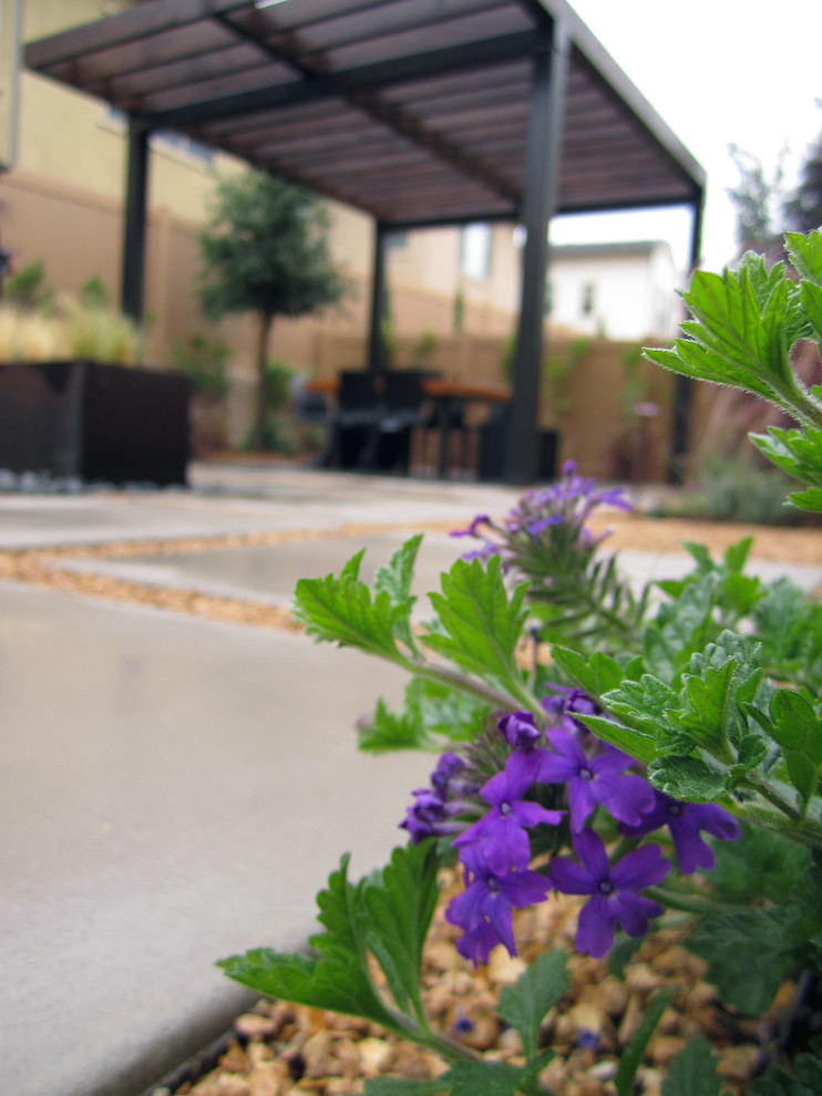 Verben 'Homestead Purple' in the foreground of a custom steel pergola and outdoor dining area. Modular concrete pavers.