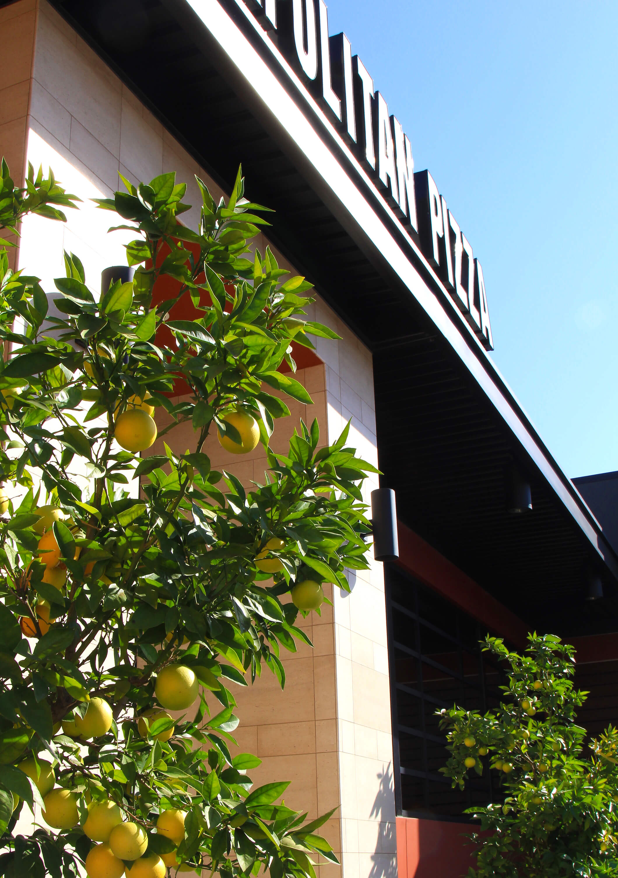 Mature craned-in fruitless Olive trees with a Feather Grass foreground creates a serene and inviting approach to the restaurant.  Horizontally running Ipe wood on the exterior walls created a modern yet warm backdrop.